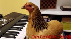 A Patriotic Chicken Plucks Out the Notes to 'America the Beautiful' With Her Beak on a Portable Keyboard