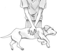 Pet Lifesavers: Cornell University College of Veterinary Medicine's New Guidelines for Pet CPR