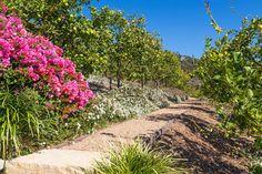 Found my dream home!!!   0 Carbon Canyon Road Malibu, CA 90265 - $27,500,000 - Chris Cortazzo