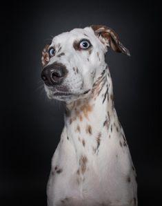 Ваш пёс: о чем он думает? / Научный хит