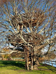 The Lake-Nest Tree House in New York, seen here, was designed by Roderick Wolgamott Romero. The house is comprised of two platforms, one 19 feet and the other roughly 35 feet above the ground. Copyright: Roderick Wolgamott Romero