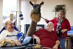 Heartwarming Photos of Therapy Llamas Interacting with Patients at a Hospital llamalove1