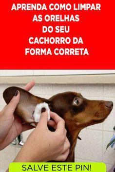 West Terrier, Fox Terrier, Love Pet, I Love Dogs, Dog Spa, Animal Design, Dog Care, Pet Shop, Shih Tzu