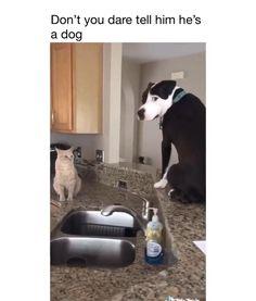 Funny Animal Jokes, Funny Dog Memes, Funny Dog Videos, Funny Animal Pictures, Animal Memes, Cute Funny Dogs, Cute Funny Animals, Gato Gif, Cute Dogs And Puppies