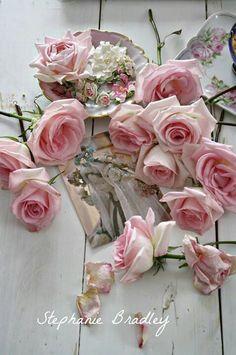 Roses, wonderful roses...