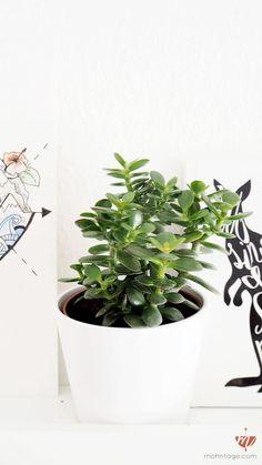 welche pflanzen sind ungiftig f r katzen pflanzen einrichten und wohnen pinterest. Black Bedroom Furniture Sets. Home Design Ideas
