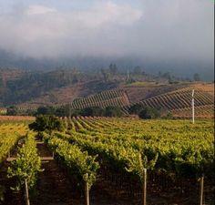 Vineyards, Casablanc Valley