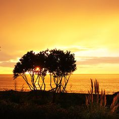 Sunrise in Bay View, Hawke's Bay, NZ by SeeOneSoul.org