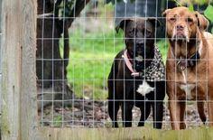 El peligro de los collares eléctricos para perros   EROSKI CONSUMER