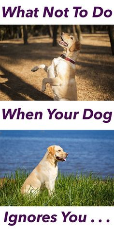 Being ignored by your dog is no fun. Find out how to cope when your dog doesn't obey the recall