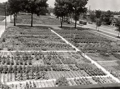 1000 Images About Community Gardens On Pinterest Chicago Gardens And Urban