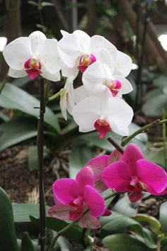 White Purple Orchid Flower