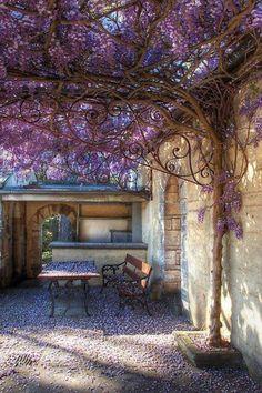 wisteria & lacework frame
