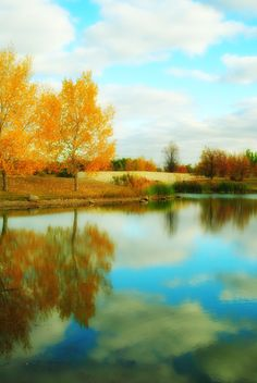 autumn at the dog park