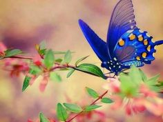 Blue with yellow butterfly on flowers