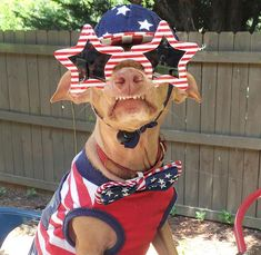Today is National Dog Day! And that means millions of sweet, loving pups around the world will be celebrating and playing with their owners and forever families. Tuna Dog, Today Is National, Dachshund Mix, Happy Independence Day, Dog Names, Dog Art, Dog Training, Chihuahua, Puppies