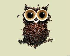 Owl coffee beans