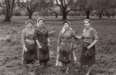 Raccoglitrici di olive in Calabria. Gioia Tauro (Reggio Calabria), 1955 circa. #TuscanyAgriturismoGiratola