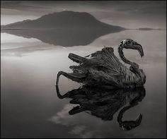 Nick Brandt  This creepy lake turns animals into calcified statues  In 2011, when photographer Nick Brandt was traveling in East Africa, he visited some of the most alkaline lakes in the entire world.