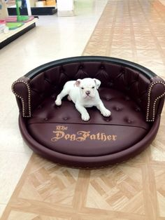 Tired dog beds