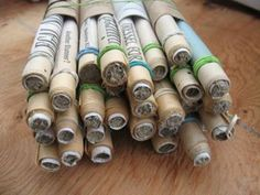 Mason bee male waits for female in a paper tube made by author.  Broken mud caps are visible in last years (darker) nest tubes.     HOUS...