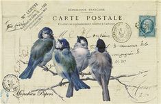 4 Blue Birds - R1-