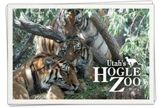 Need an idea for a family fun day trip? Utah's Hogle Zoo is guaranteed to delight both adults and kids alike. Hogle #Zoo is one of Utah's prize crown jewels, located since 1931 at the mouth of historic Emigration Canyon and one of the top visited attractions in the state — and the number one paid tourist attraction in Salt Lake City. Add it to your vacation next time you're here and your kids will thank you for it! http://www.highwaywestvacations.com/day-utahs-hogle-zoo/