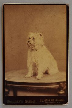 Cabinet Photograph ~ Adorable Terrier Dog