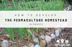 How to Develop the Permaculture Homestead in Phases: Here's how to create a plan that breaks down all your dreams for your permaculture homestead into bite-sized phases of development.