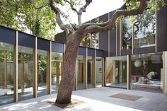 Pear Tree House designed by architectural studio Edgley Design,