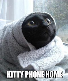 E. T. Cat... #cat #humor #cats #funny #quotes #lolcats #meme #cute =^..^= www.zazzle.com/kittyprettygifts