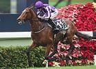 Japanese Horses Dominant in Hong Kong
