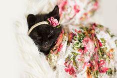Family Celebrates Kitten With Newborn Photoshoot