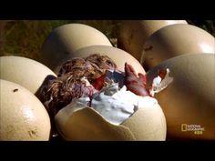(6) Learn About Baby Birds | Nat Geo Kids Birds Playlist - YouTube