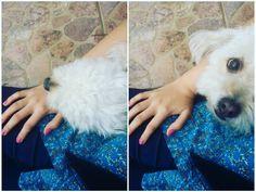 🐶🐕😍 juntas! #kanelita #dog #together #love #truelove #baby