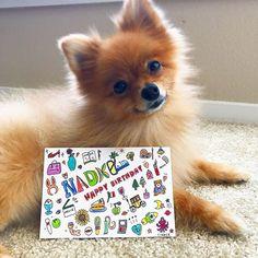 愛犬と作品のコラボ。 . ちなみに彼女は生まれた時から英語の生活なので日本語には反応しないです。面白い!犬も言語がわかるんです! . オリジナルイラストギフトを作っています!イニシャル入りのものはあってもなかなかなかった名前入りのオーダーメイドオリジナルギフト!1000円から . 色々な作品を出してるのでぜひホームページをのぞいてみて下さい! #art #illustration #puppy #english #california #dog#pomeranian #犬#愛犬#可愛い#ポメ#ポメラニアン #もふもふ#ふわふわ#英語#日本語#イラスト#プレゼント#西海岸#カルフォルニア#アメリカ#大好き#子犬#家族#友達