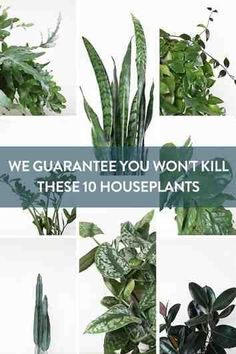 10 Houseplants That Are Tough to Kill