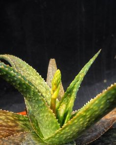 Urban Farming, Cactus Plants, Aloe, Ph, Succulents, Meet, Animals, Instagram, Animales