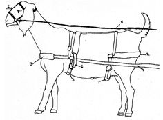 4H Goat Harness