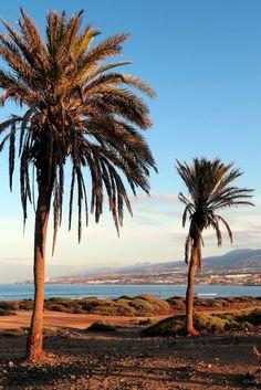 Playa de las Americas in Tenerife, Canary Islands, Spain - https://worldadventuredivers.com/2016/10/17/scuba-diving-with-eagle-rays-in-tenerife-spain/