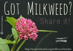 Have an abundance of milkweed on your property? Check out the Milkweed Market Project.