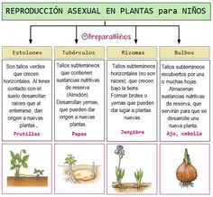 The Cramps, Biology, School, Garden, Nature, Flowers, Ideas Para, Google, Plant Life Cycles