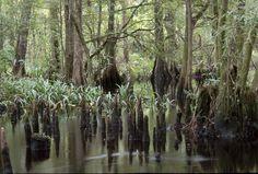 #Wetlands