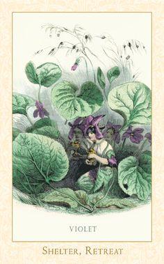 Shy violet fairies by JJ Grandville's, 'Les Fleurs Animées', 1847.