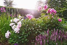 Flowers Perennials Your Ultimate Guide to Flowering Perennials: Which Popular Plants Bloom When? Flowers Perennials, Planting Flowers, Flowers Garden, Top Flowers, Flower Gardening, Spring Flowers, Garden Plants, House Plants, Fruit Garden