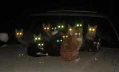 cat night vision - Google Search