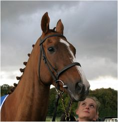 Dream Alliance . Racehorse from Cefn Fforest - South Wales Valley's  ..  - Subject of Dark Horse Documentary