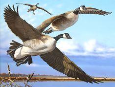 The Canada Goose Bird Wildlife Paintings, Wildlife Art, Game Birds, Duck Hunting, Flying Geese, Bird Pictures, Outdoor Art, Beautiful Birds, Animals And Pets