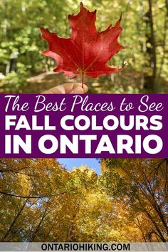 These are the most amazing places to see the fall colours in Ontario. Check out these best Ontario hiking trails and lookout points. Fall colors in Ontario   Ontario fall foliage   Ontario fall colours   Best fall hikes in Ontario   Fall lookouts in Ontario   Ontario fall hiking   Where to see fall foliage in Ontario   Autumn leaves Ontario   Autumn colours in Ontario   When to see fall colours in Ontario