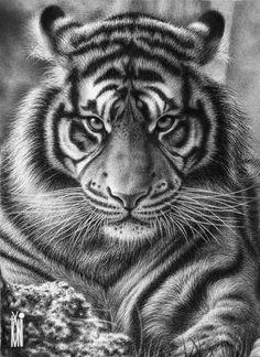 great Tiger by on DeviantArt Tiger Face Tattoo, Tiger Tattoo Sleeve, Tiger Tattoo Design, Tiger Design, Sleeve Tattoos, White Tiger Tattoo, Neck Tattoos, Dragon Tattoos, Hand Tattoos
